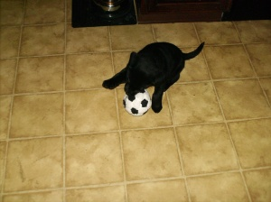 Rocco plays soccer just like Daddy!